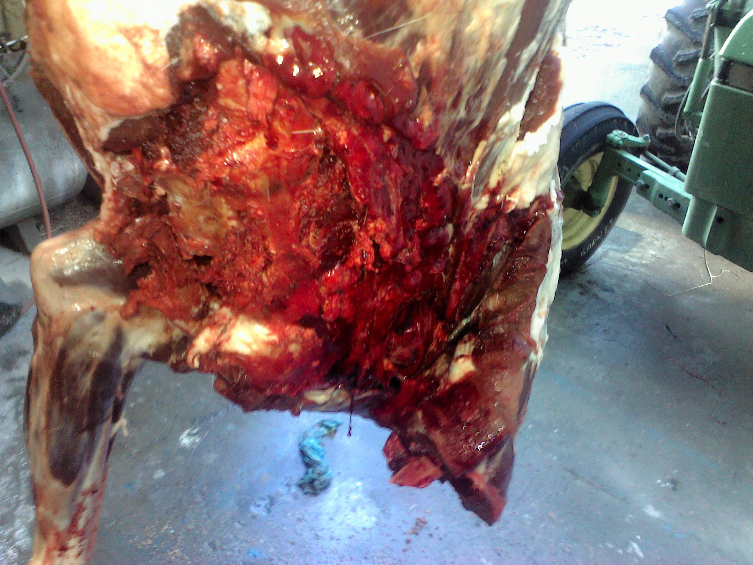 150 LRAB bullet damage.jpg