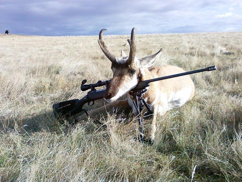 Antelope on Savage 111F .300 WM.jpg
