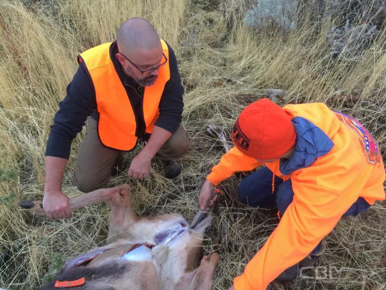 cbm deer 2.jpeg