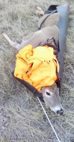 deer sled 2 of 2.jpg
