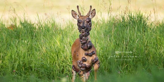 deer1.jpg