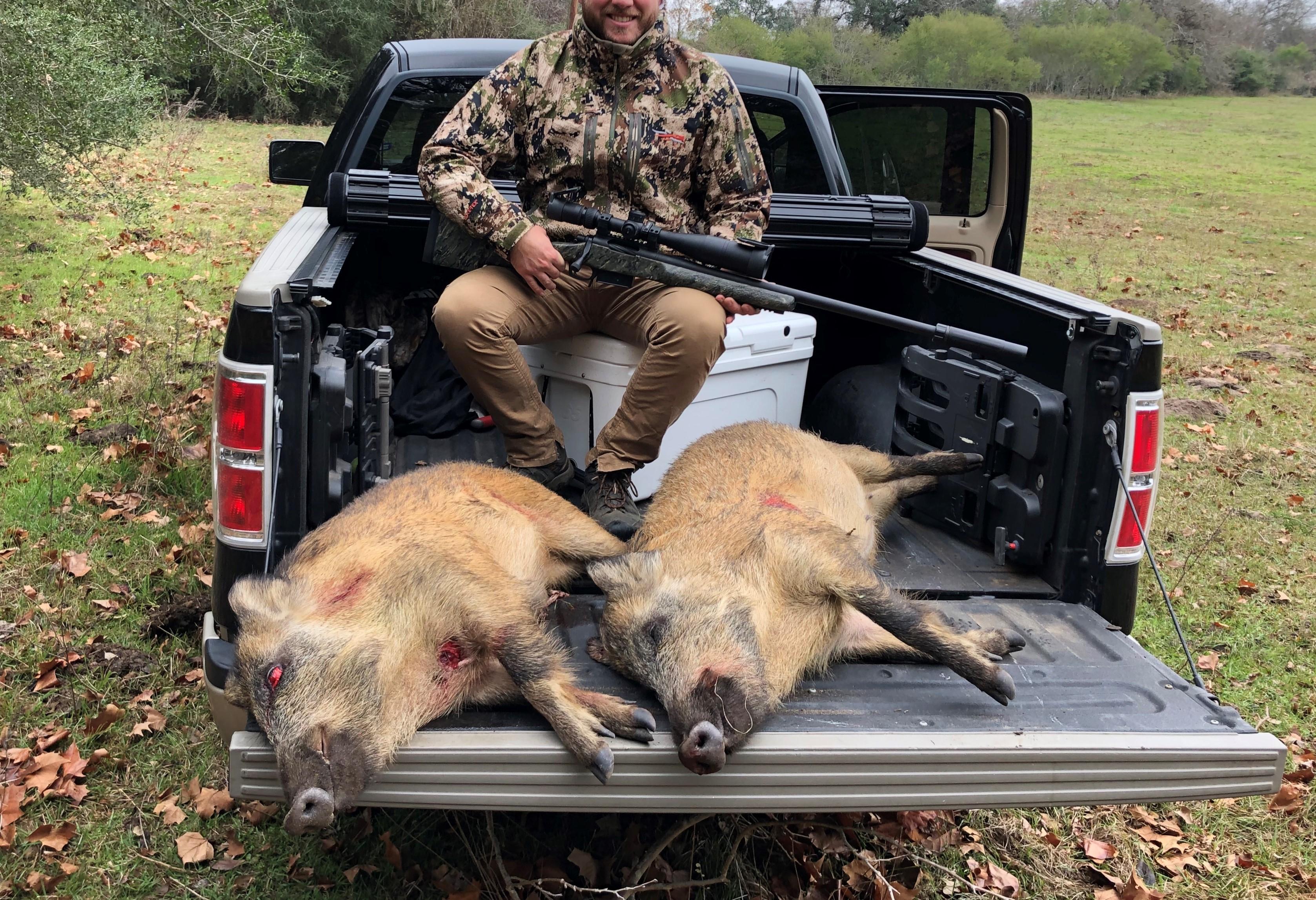 Hogs_20191223.jpg