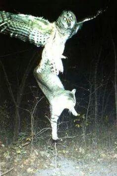 Owl and Cat.JPG