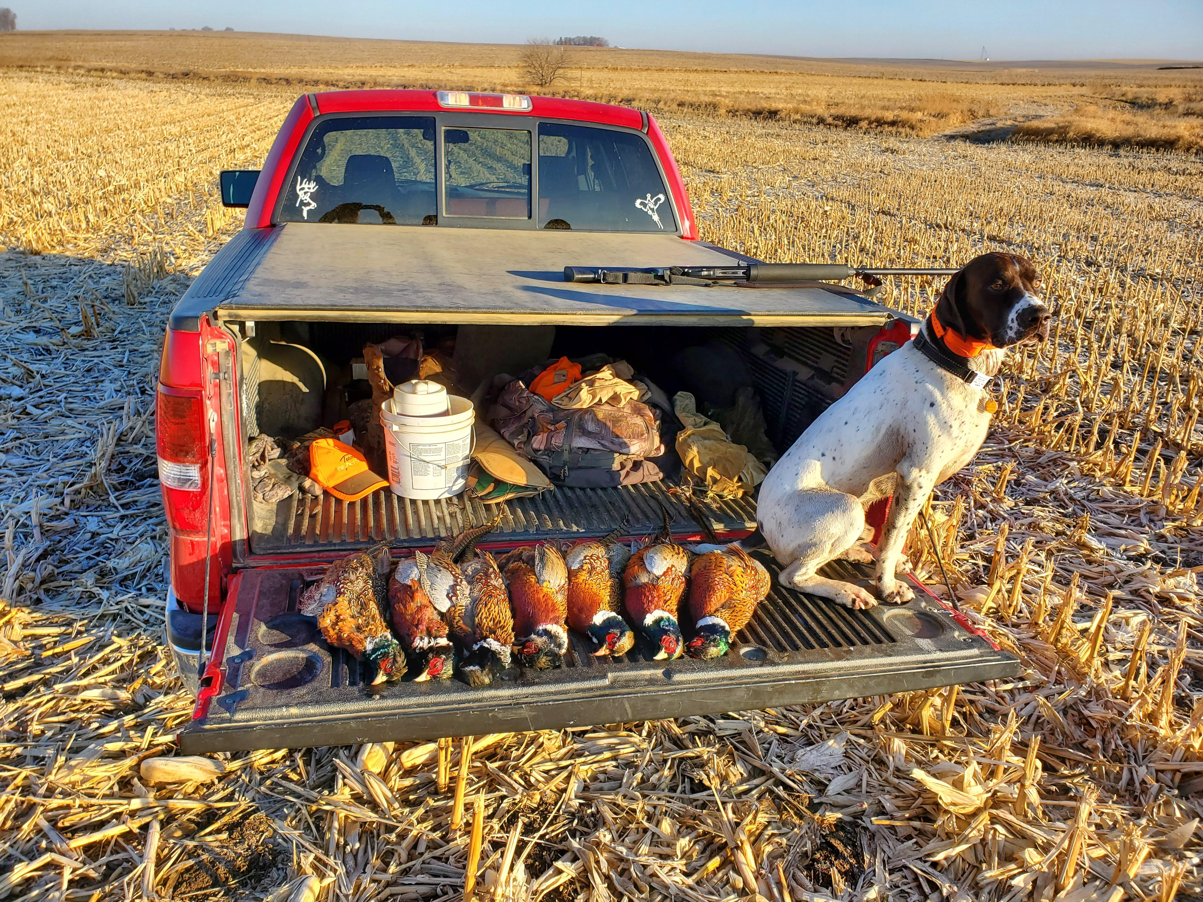 Rowdy with 7 roosters.jpg