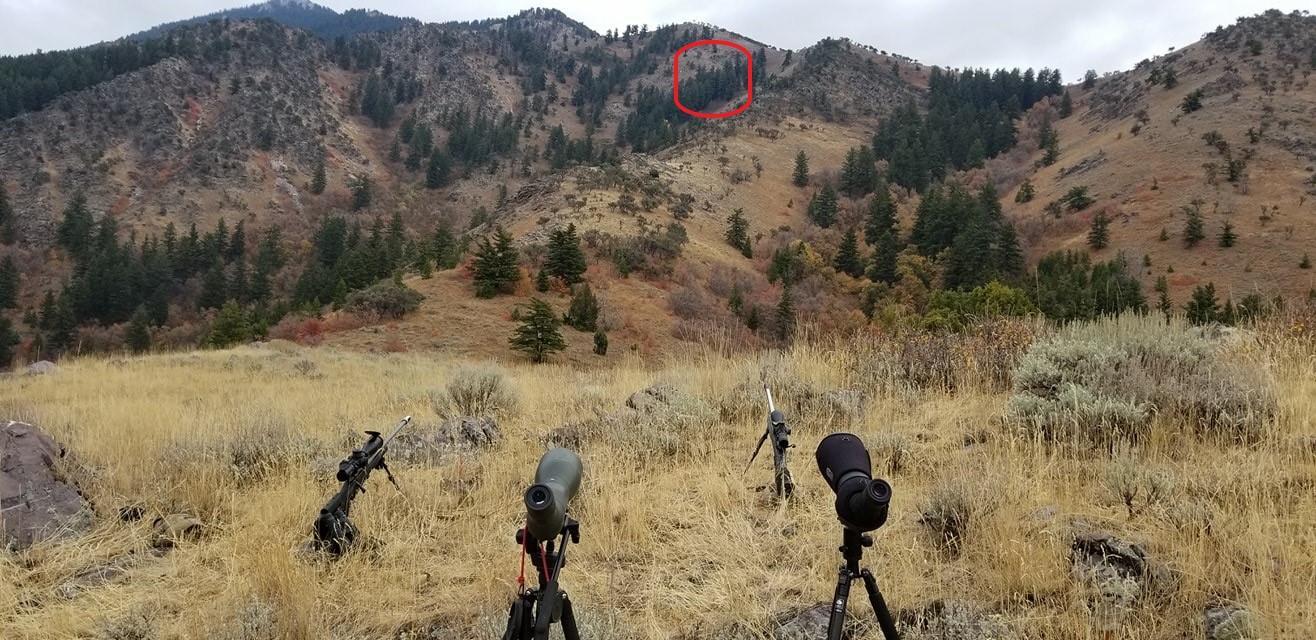 Shooting Position.JPG