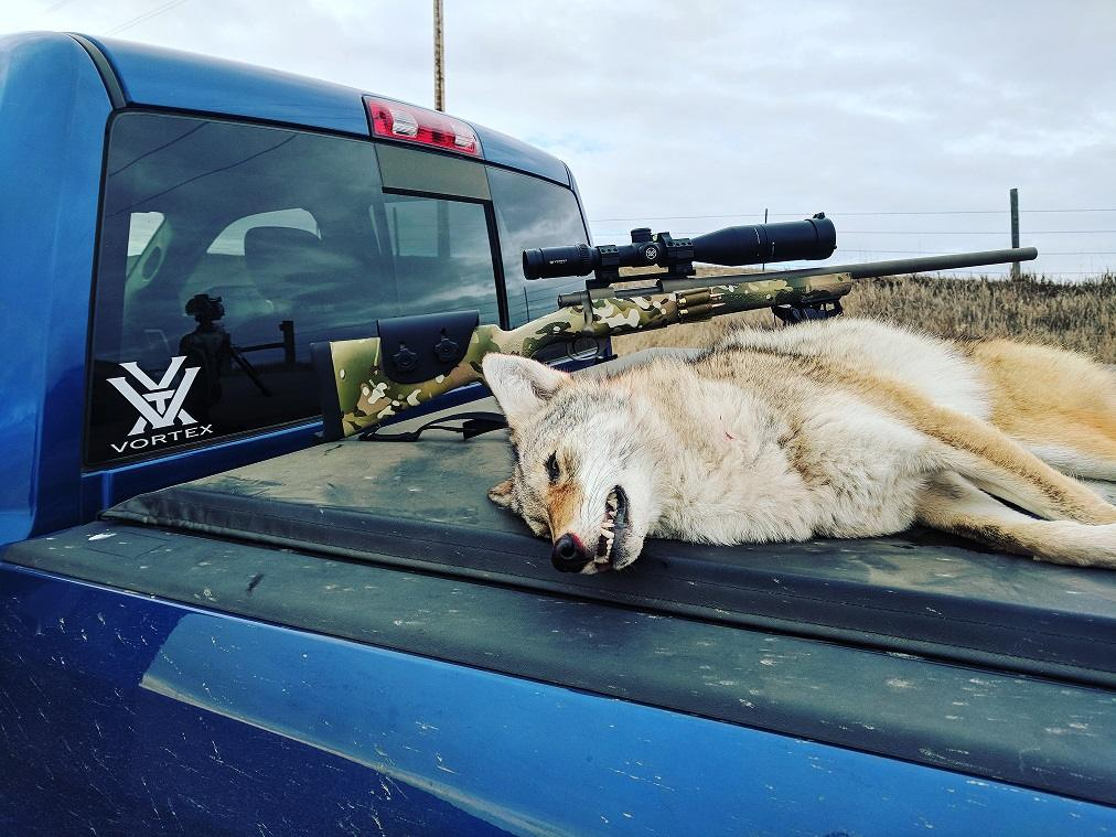 Coyote with 6 5 | Long Range Hunting Forum