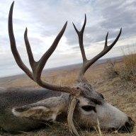 Muley Buck
