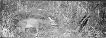 459 Yard Buck