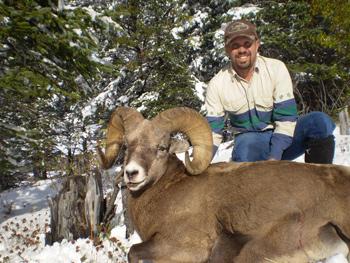 Alberta Bighorn Sheep Hunt