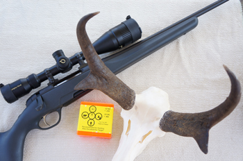 Steyr + Quigley/Ford + Berger = One Antelope Buck