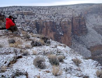Arizona Strip Desert Sheep Hunt