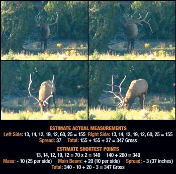 Field Judging Elk