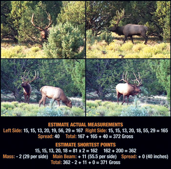 Field Judging Elk