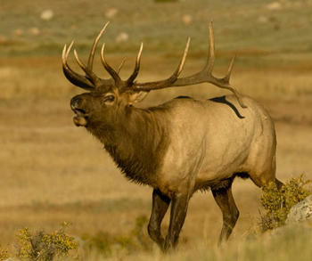 5 Secrets To A Successful Elk Hunt