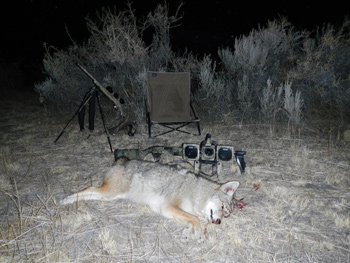 Coyotes In Your Pocket - A Quest To Shotgun Coyotes