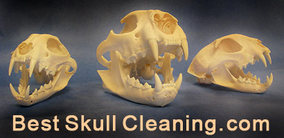 best skull cleaning