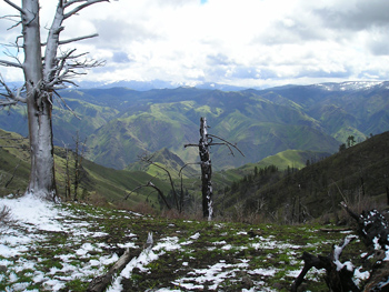 Hell's Canyon Spring Bear Hunt